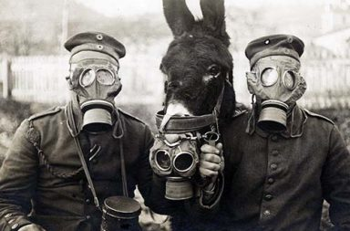 Two German soldiers and their mule wearing gas masks, 1916 small