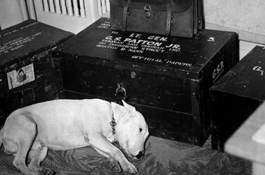 General Patton's dog after his death, 1945