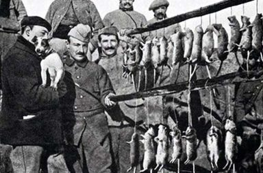 Trench rats killed by a terrier, 1916