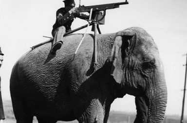 Elephant-mounted machine-gun, 1914