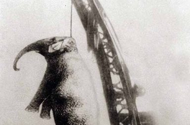 Murderous Mary, the elephant that was hanged for murder, 1916