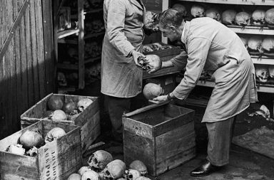 Packing up human skulls, 1948