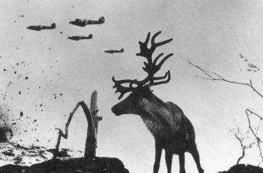 Reindeer in Murmansk, 1941