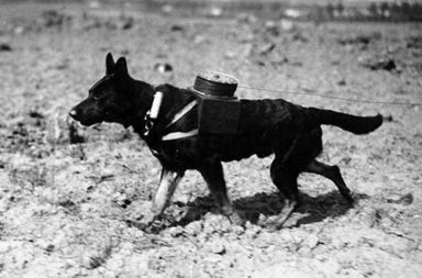 Animals in World War One, 1914-1918