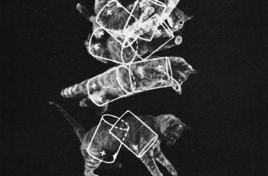 "The ""falling cat"" phenomenon that helped NASA prepare astronauts for zero gravity, 1969"