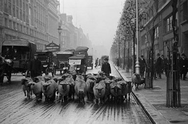 When London parks used sheep as natural lawnmowers, 1926-1938