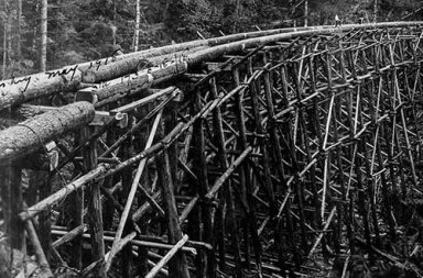 The lumberjacks who felled the giant trees of British Columbia, 1900-1930