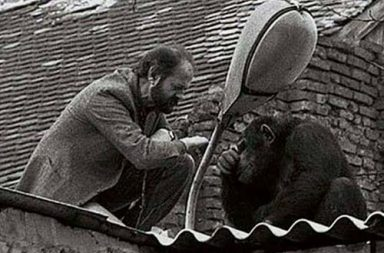 The zoo director tries to convince Sammy the chimpanzee to return home after he escaped, 1988